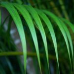 The Palm Fronds